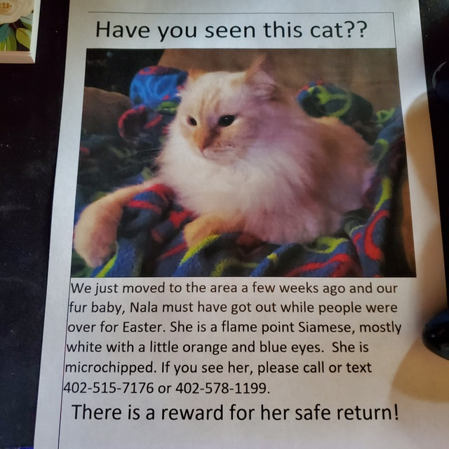 LostCat flyer