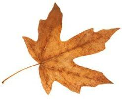 2013-09-11 MAPLE LEAF